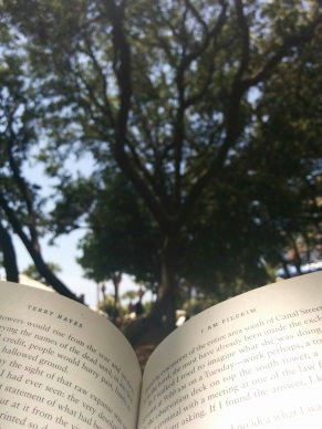 My favorite spot to read, under the trees