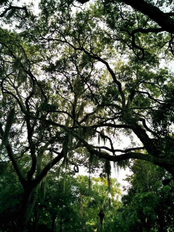 I loved the spanish moss in these old trees...so romantic